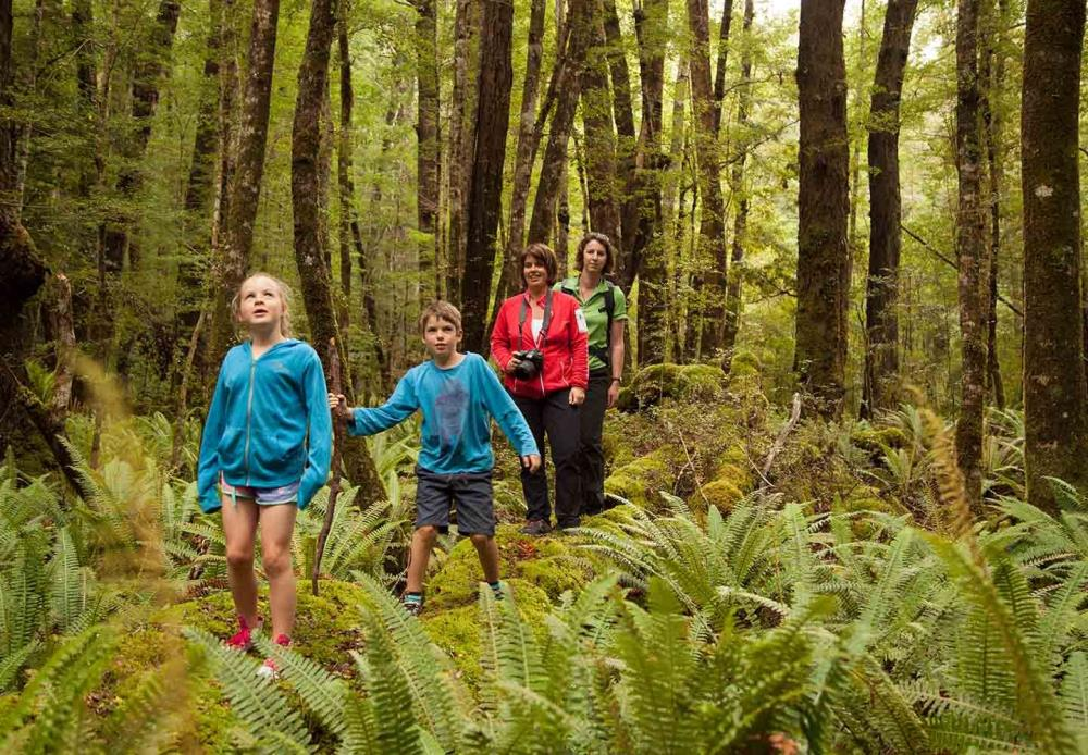 Learn about the native forest and its inhabitants on the Kepler Track